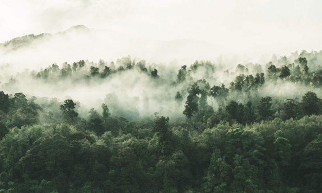 Rischio Clima e tutela dell'ambiente, l'impegno dei governi e delle aziende